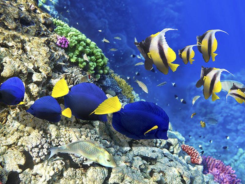 Coralli & Invertebrati