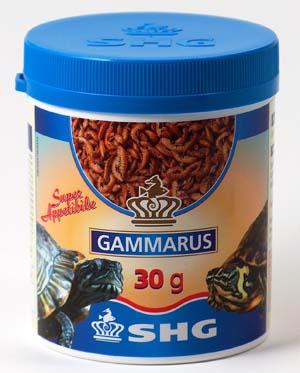 SHG GAMMARUS